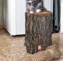 Когтеточка для кошек своими руками из дерева