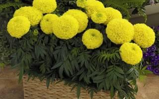 Цветы и растения на балконе